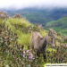 Eravikulam National Park tour